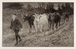 Boy and Cows