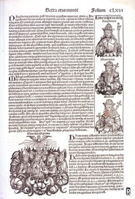 St. Nicephorus, Seventh Ecumenical Council of the Catholic Church (recto) / Paul the Deacon (etc.) (verso) from the Nuremberg Chronicle