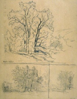 Maple and willows