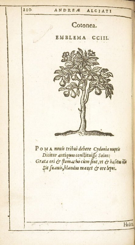 Hedera (Ivy), emblem 204 in the book Emblemata by Andrea Alciato (Antwerp: Plantin [under the direction] of Raphelengius, 1608)