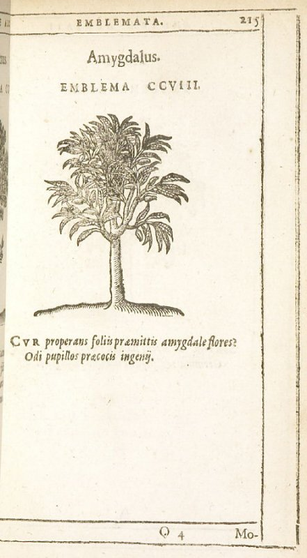 Morus (The mulberry), emblem 209 in the book Emblemata by Andrea Alciato (Antwerp: Plantin [under the direction] of Raphelengius, 1608)