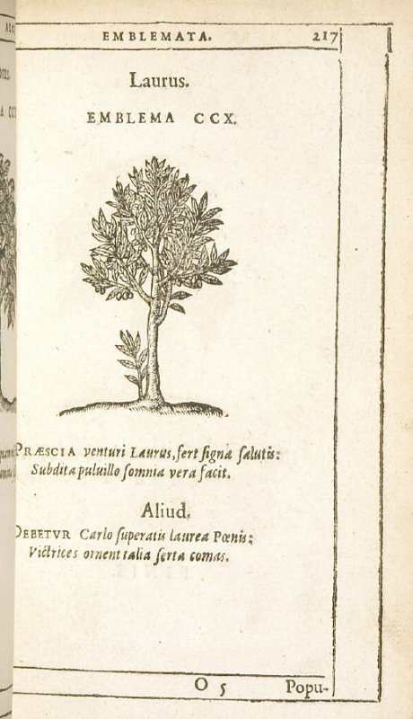 Populus alba (The white poplar), emblem 211 in the book Emblemata by Andrea Alciato (Antwerp: Plantin [under the direction] of Raphelengius, 1608)
