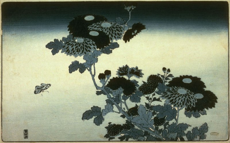 [Chrysanthemums and butterfly]