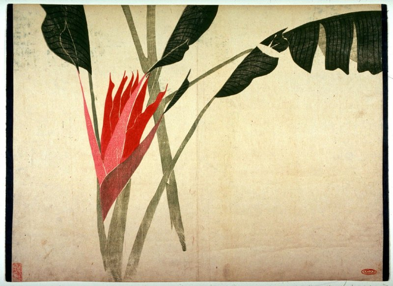 Untitled sheet of Blossoming Haliconia from an album of large Shijo-style surimono