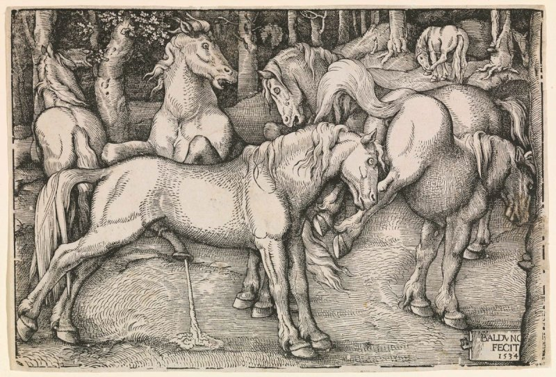 Group of Six Horses, from a series of wild horses in a wood