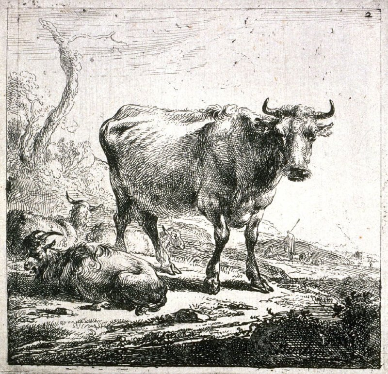 [#2 from] Set of Six Etchings of Cattle (Cows)
