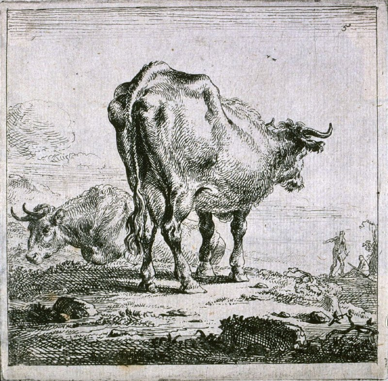 [#5 from] Set of Six Etchings of Cattle (Cows)