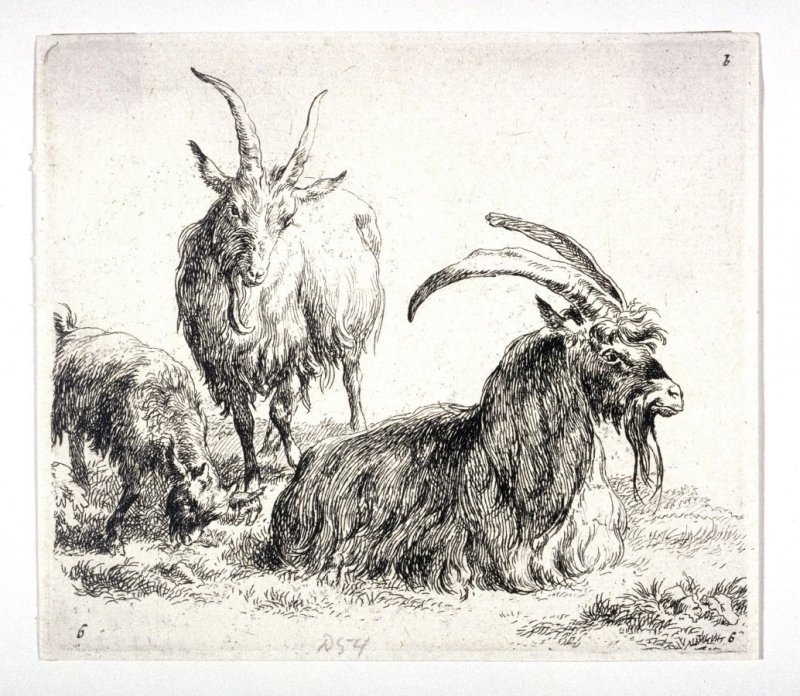 "Three Goats, from ""A Man's Sketchbook,"" a suite of eight prints /Animalia ad vivum delineata et aqua forti aeri impressa Studio et Arte Nicolai Berchemi/"