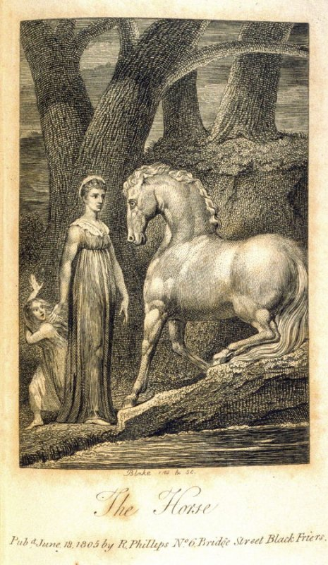 The Horse, plate opposite page 204 in the book Ballads… relating to Animals (London: Richard Phillips, 1805)