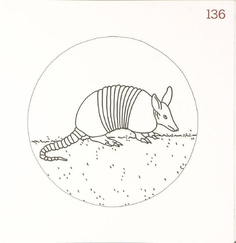 Untitled (Armadillo), page 136 in Another Name / General Instruction
