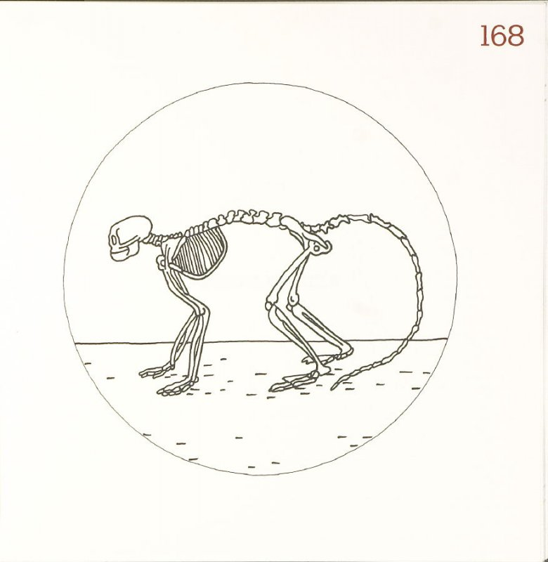 Untitled (Animal Skeleton), page 168 in Another Name / General Instruction