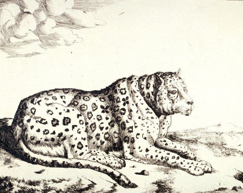 Plate 2 from a series of Leopards