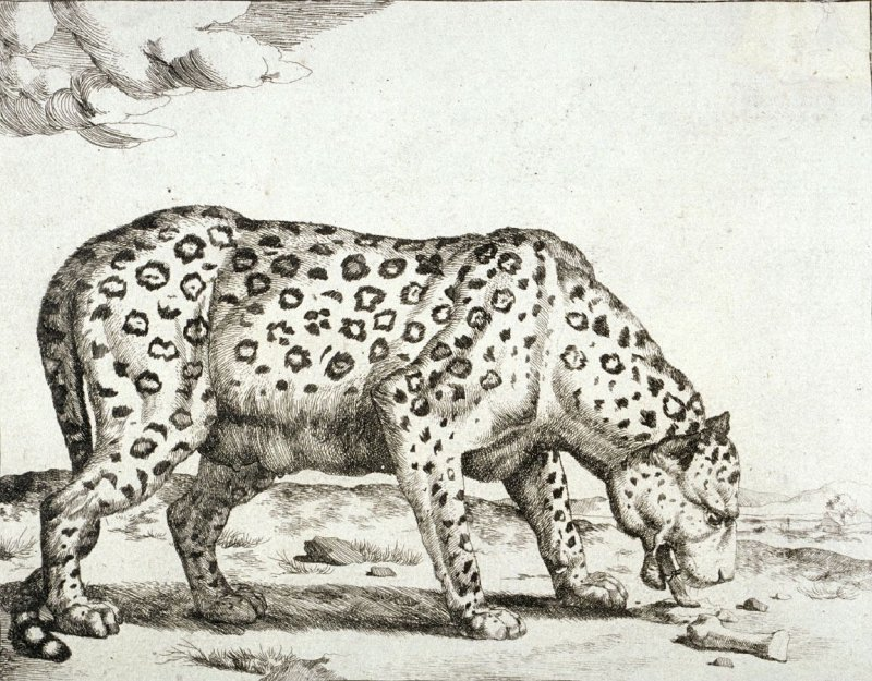 Plate 4 from a series of Leopards