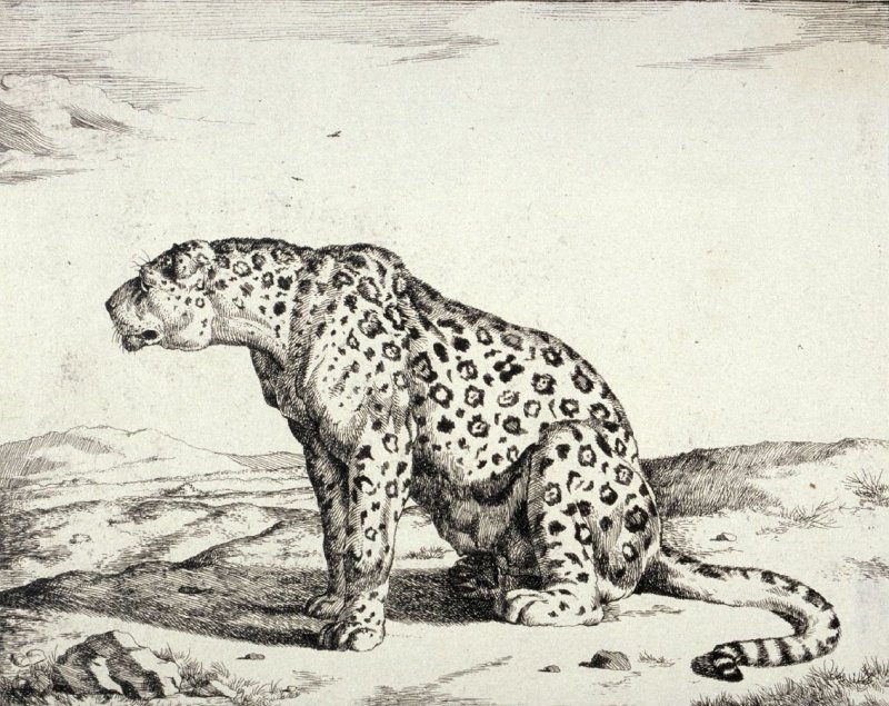 Plate 5 from a series of Leopards