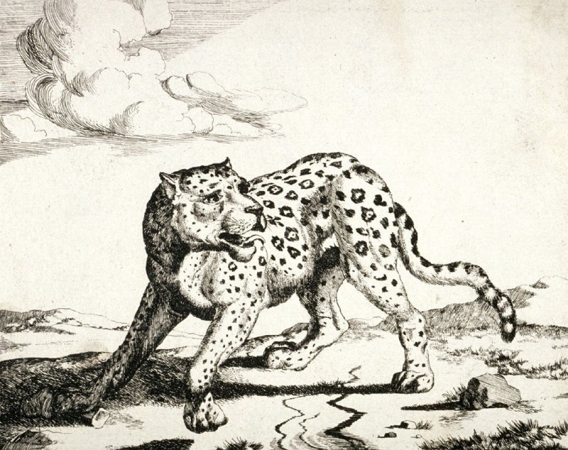 Plate 7 from a series of Leopards