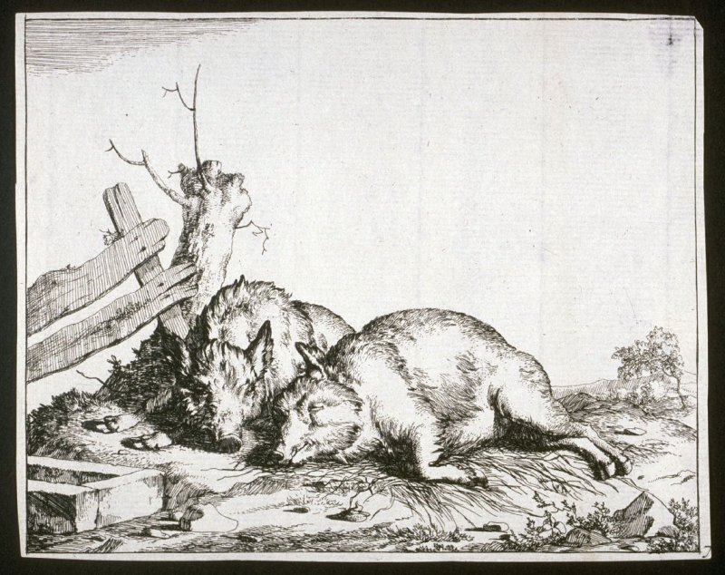 One of eight plates: Swine (Plate 7)