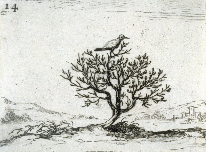 Nightingale in a Bush, plate 14 from Lux Claustri