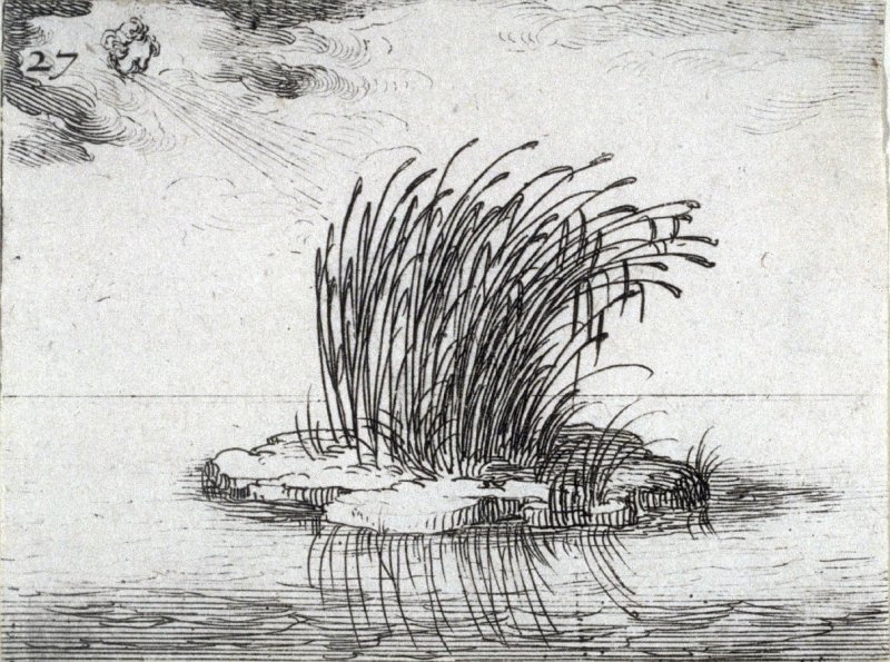 Reeds and the wind, plate 27 from Lux Claustri