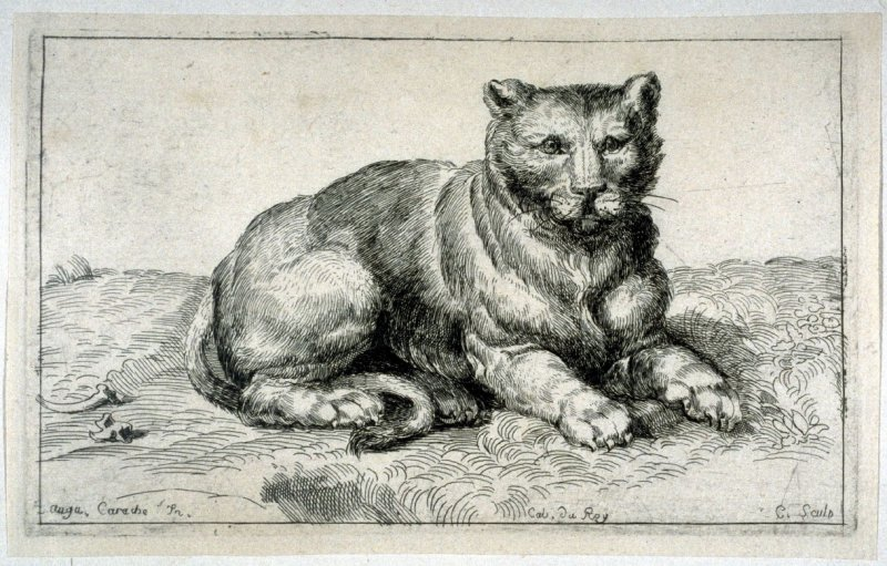 Resting Lion, from the Cabinet du Roi