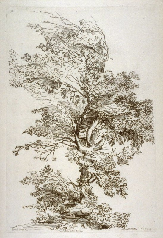 Study of a Large Tree, no. 31 from the Cabinet Crozat