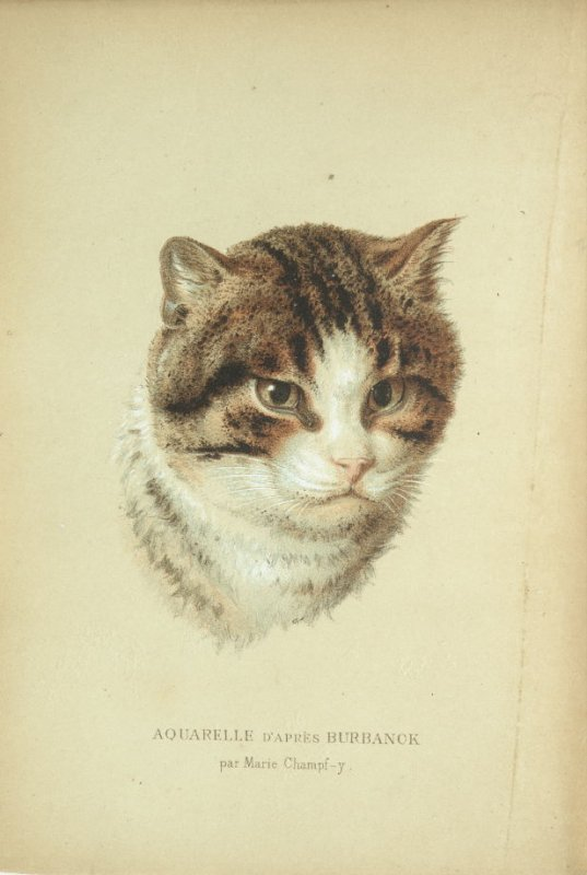"""Tête de chat (head of a cat),"" frontispiece, in the book Les Chats (Cats) by Champfleury (Paris: J. Rothschild, 1870)."