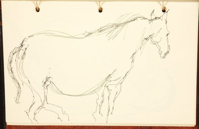 Illustration 3 in the book The Birth of a Horse (sketchbook)