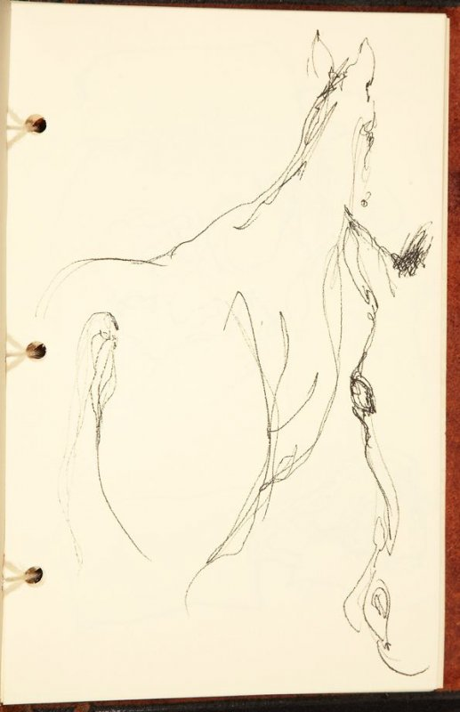 Illustration 5 in the book The Birth of a Horse (sketchbook)