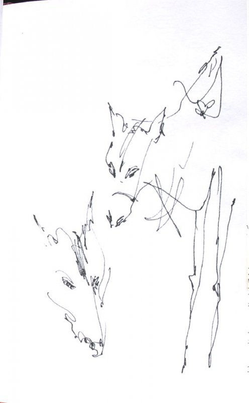 Untitled (Horses), Illustration 27 in the book Sketchbook (Honeymoon)
