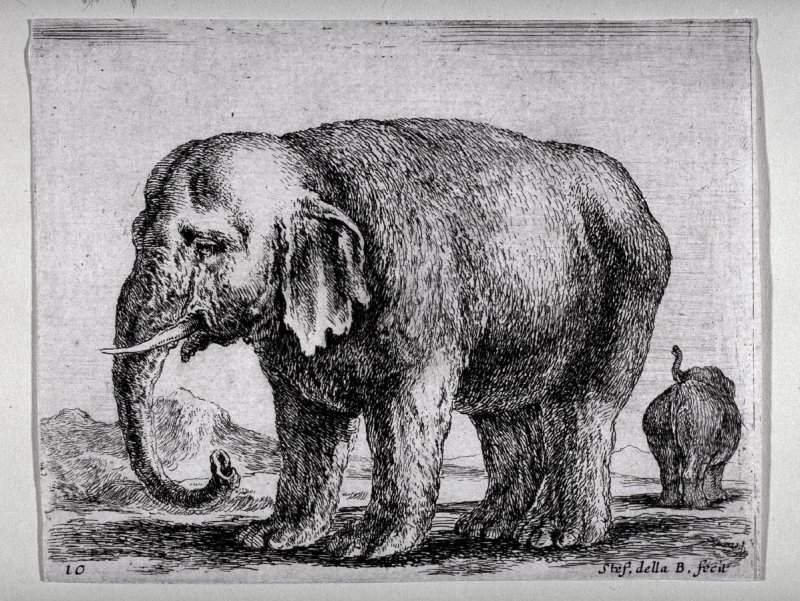 An Elephant, from the series Diversi Animali