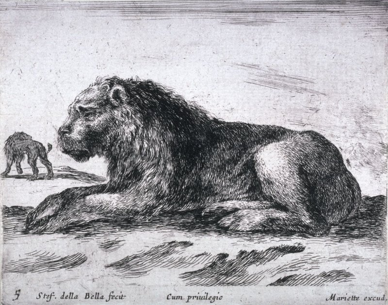 Lions, from the series Diversi Animali