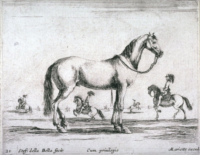A Horse, from the series Diversi Animali