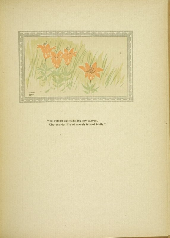 "Untitled, accompanying the poem ""The Marsh Island Lily,"" in the book By Salt Marshes by Everett Stanley Hubbard (Publisher and location unknown, 1908)"