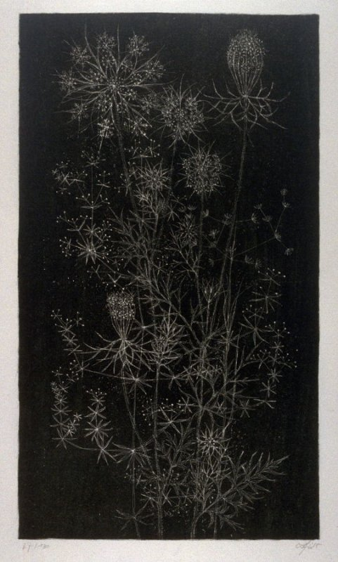 Flowers and Grasses