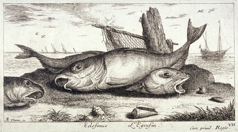 Edefinus, L'Egrefin (The Haddock), from Salt Water Fish, Part III