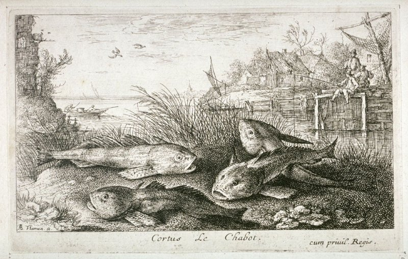 Cortus, Le Chabot (The Bullhead or The Chub), from Fresh Water Fish, Part II