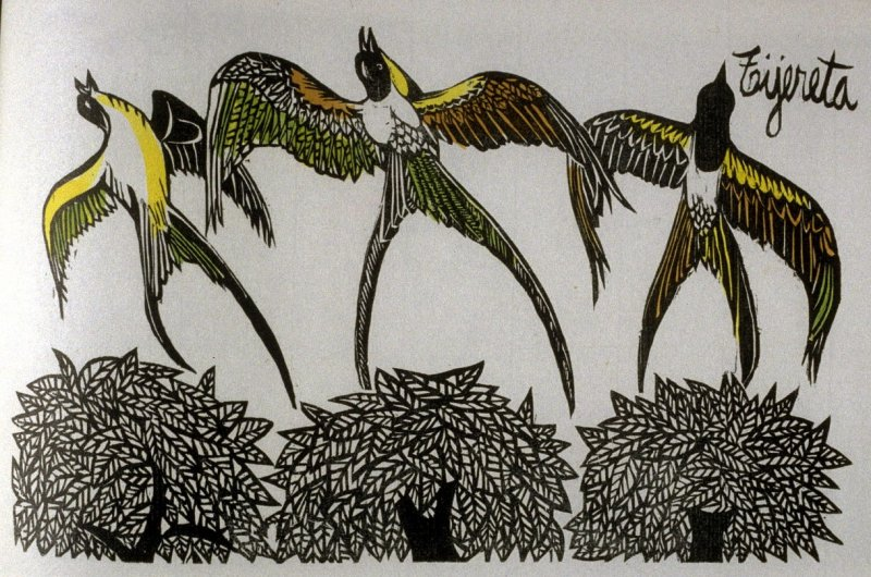 Tijereta: Scissor-Tailed Tyrant, fifth plate in the book Birds from my Homeland with notes from W. H. Hudson's Birds of La Plata ([New York: Igal Roodenko,] 1958)
