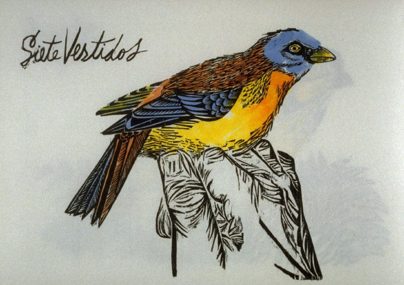 Siete Vestidos: Blue and Yellow Tanager, eighth plate in the book Birds from my Homeland with notes from W. H. Hudson's Birds of La Plata ([New York: Igal Roodenko,] 1958)