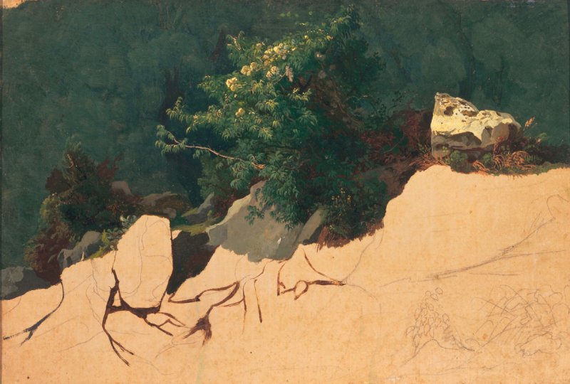 Study of Mountain Laurel and Rocks in the Roman Campagna
