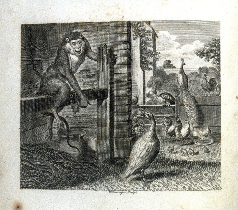 The Baboon and the Poultry, opposite page 17 in the book, Fables by John Gay (London: John Stockdale, 1793), vol. 2