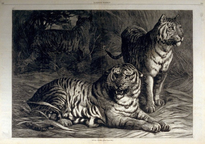 Royal Game -from Harper's Weekly, (March, 18. 1876), pp. 228-229