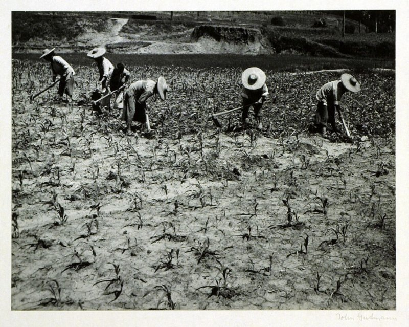 """Yunnanese peasant women hoeing a field. China's earth is still cultivated according to archaic methods. Most of the """"lighter"""" farm work is performed by women."""