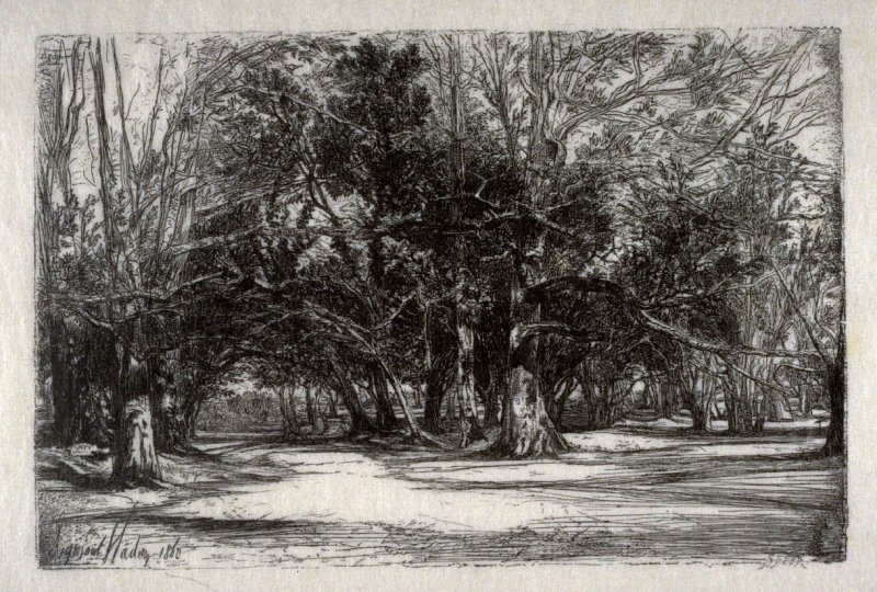 Wood engraving after: A By-road in Tipperary