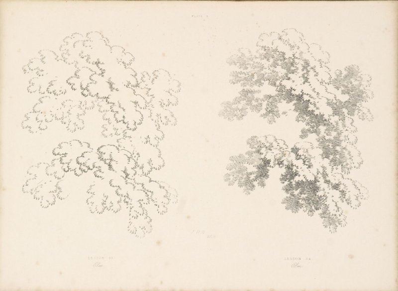 Illustration 10 in the book Lessons on Trees (London: David Bogue, 1850)