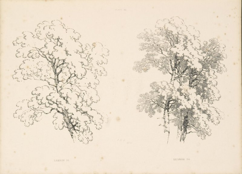Illustration 11 in the book Lessons on Trees (London: David Bogue, 1850)