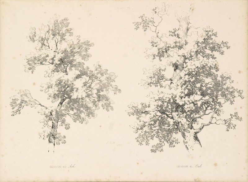 Illustration 14 in the book Lessons on Trees (London: David Bogue, 1850)
