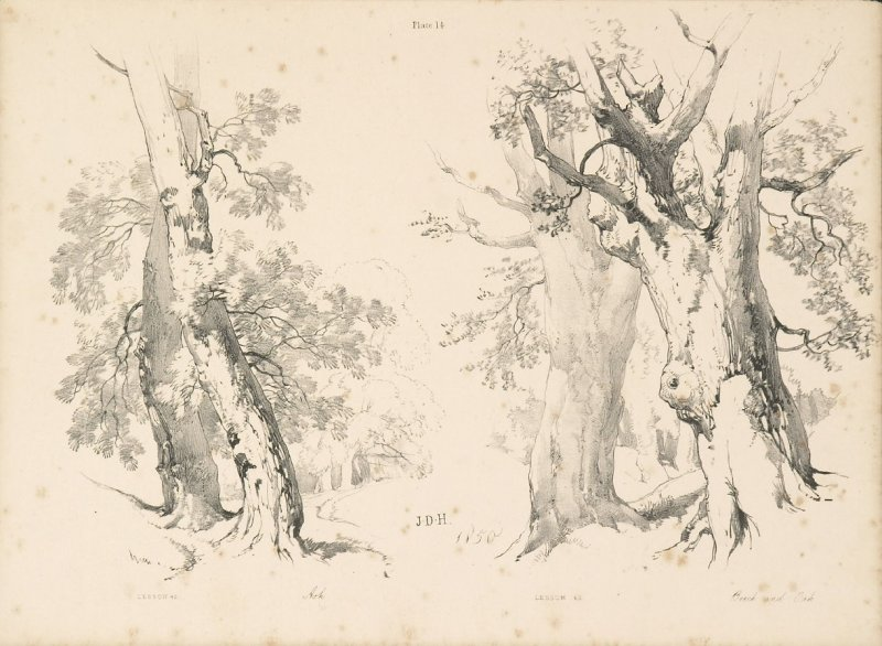 Illustration 15 in the book Lessons on Trees (London: David Bogue, 1850)