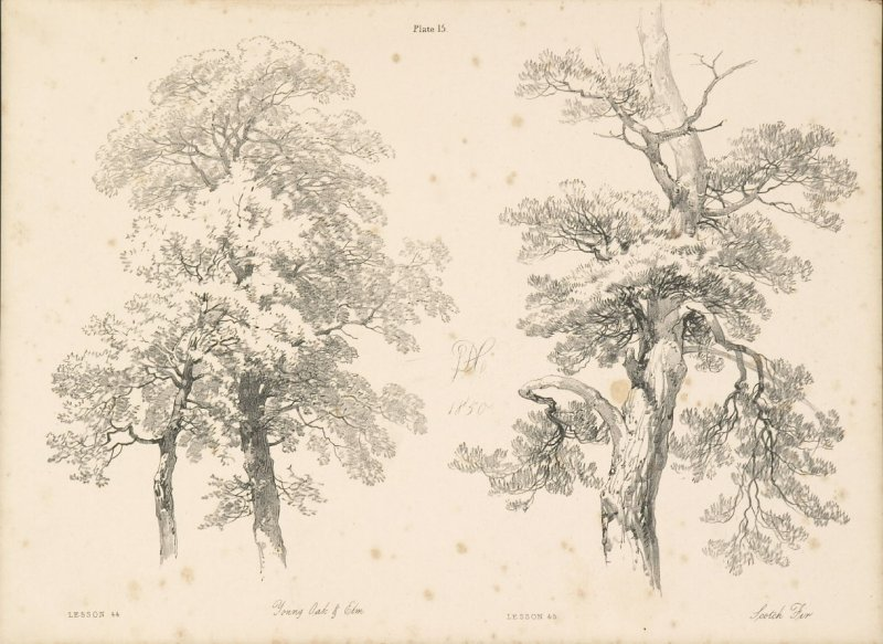 Illustration 16 in the book Lessons on Trees (London: David Bogue, 1850)