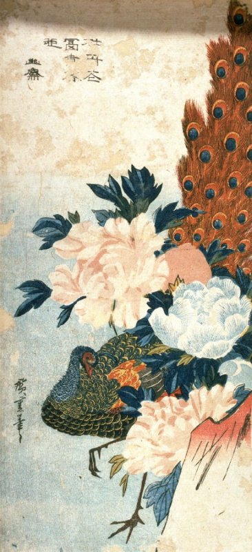 Untitled (Peacock and Peonies)