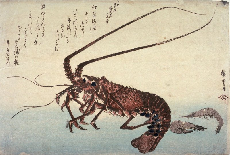 Untitled (Lobster and Two Shrimp),one of ten from an untitled series of fish