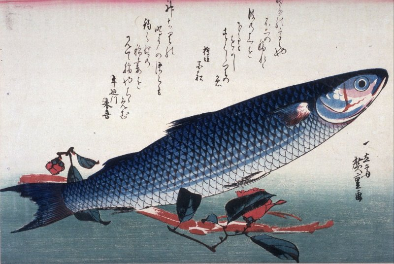 Untitled (Bora, Udo, and Camellia),one of ten from an untitled series of fish